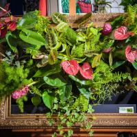 №135 Фитокартина из прекрасных антуриумов,маранты и других цветочков
