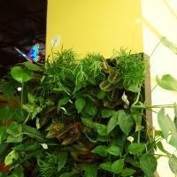 №134 СЕГОДНЯ В ПРОДАЖЕ!! ФИТОСТЕНА 2000*1000 с автоматическим поливом на 65 растений. ПОДАРИ СЕБЕ НА  НОВЫЙ ГОД - ЗИМНИЙ САД с ОЧЕНЬ ХОРОШЕЙ СКИДКОЙ!!!