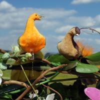 Вот такие райские птицы на арке из цветов