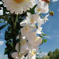 Орхидея и гербера в арке из цветов