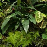 №149  Фитокартина живет в помещении,где нет дневного света...и такое возможно!Растения в картине живут уже 4 месяца и никаких проблем,разрослись.Мы можем Вам предложить и другую растительность...