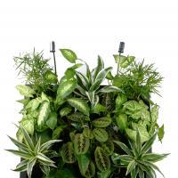 №133 СЕГОДНЯ В ПРОДАЖЕ! ФИОТОКАРТИНА 600*600,в картине 17 растений. Первому покупателю такой картины-ОЧЕНЬ КЛАССНЫЙ НОВОГОДНИЙ ПОДАРОК!!