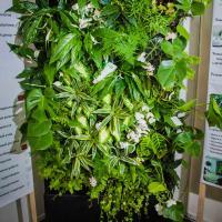 №139 Фитостена из 65 растений. Весеннее настроение